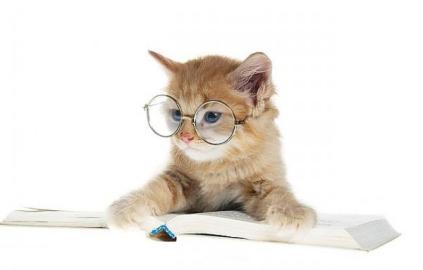 cat-glasses